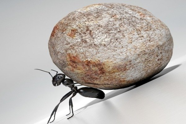 ant pushing rock uphill